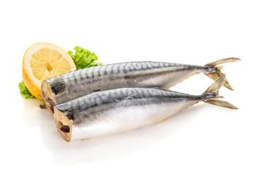 mackerel fish isolated on white background