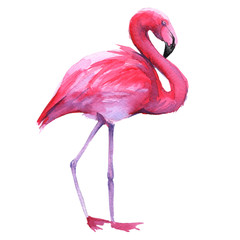 Pink flamingo. Isolated on white background.