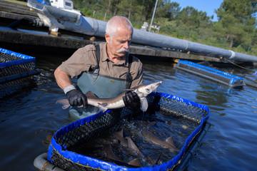 fishermen and the fish farm