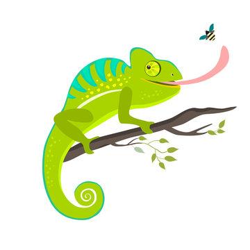 Green chameleon sitting on the branch on white background, vector illustration.