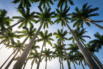 Group of Palm Trees Against Blue Sky, Tropical Holiday Concept