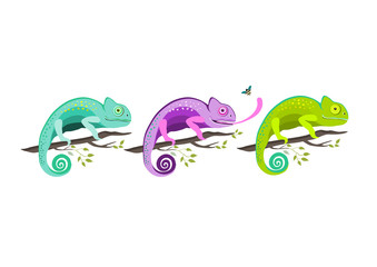 Set of colorful chameleons sitting on the branch on white background, vector illustration.