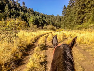 Riding a horse along a farm track towards a forest
