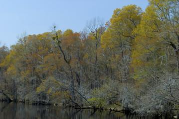Lumber River, Fair Bluff, North Carolina