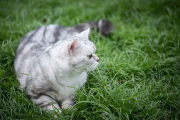 cat walking on green gras