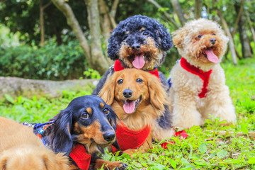 many little cute lovely dog