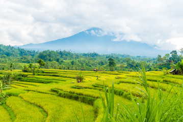 Foto auf AluDibond Reisfelder Green rice terrace fields in Bali, Indonesia