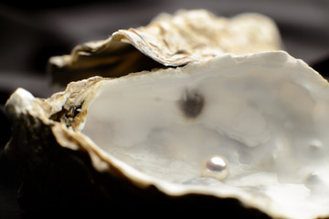 Pearl in an oyster, depth of field on black background