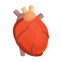 Heart medical science vector illustration flat. human anatomy