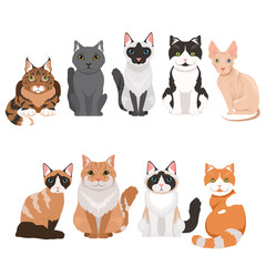 Domestic cats in cartoon style. Vector illustrations isolate on white