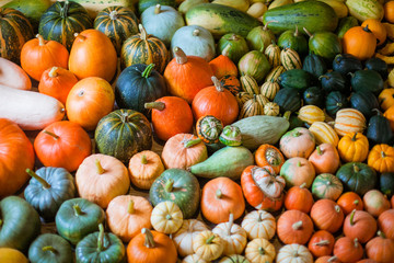 varieties of squashes and pumpkins