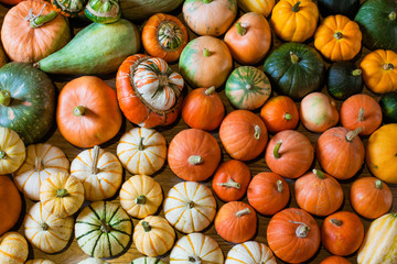 Autumn harvest of squshes and pumpkins