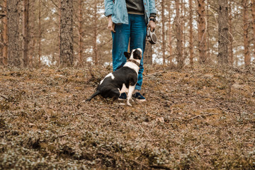 A man with a miini bullterrier tricolor dog on the walk in the forest