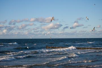 Plaża, morze i mewy