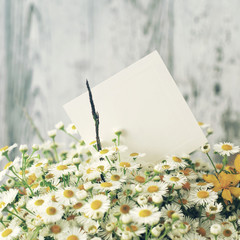 Bouquet of field camomiles and white empty card for an inscription against the background of a wooden old board