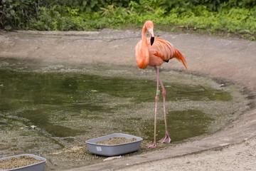 Flamingo on a granule bowl.