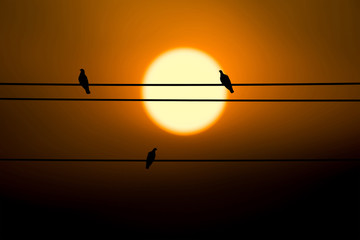Three pigeon on electric wire and sunset