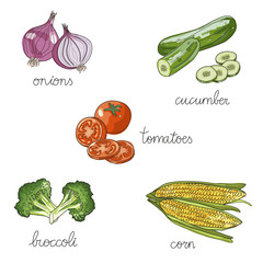Set of isolated hand drawn vegetables: broccoli, corn, onions, tomatoes, cucumber