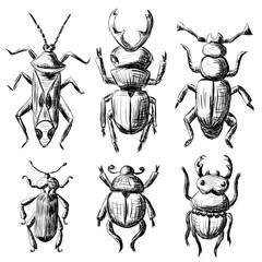 Hand drawn sketch beetles set