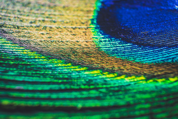 Detail close up of peacock feather eye