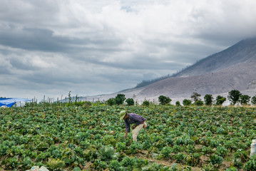 Keuken foto achterwand Vulkaan SINABUNG VOLCANO, SUMATRA, INDONESIA - September 28, 2016: Unidentified woman farmer ignores the volcano eruption and continues her work. Eruption of Sinabung killed several people in recent years