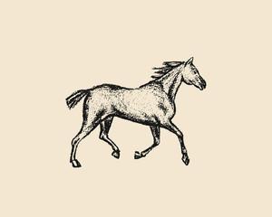 Hand drawn running horse