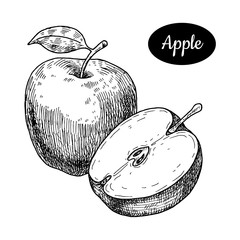 Hand drawn sketch style fresh apple.