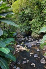 Kleiner Fluss im Dschungel Balis - Indonesien