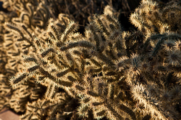 Cactus somewhere in Arizona