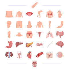 body, physiology, medicine and other web icon in cartoon style.tonsils, human, happiness, icons in set collection.