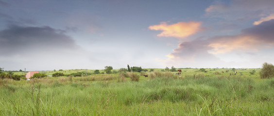 Panoramic shot of a farm in the Philippines
