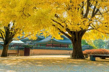Wall Murals Candy pink Autumn in Gyeongbokgung Palace,South Korea.