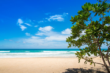 Trees at the beach and the beautiful blue sky.
