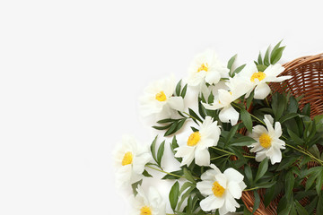 Beautiful gift - white peonies with green leaves in wooden basket on white background. Top view Mother Day concept.