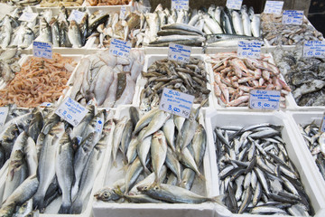 In de dag Vis Variey of Fish for Sale on Market Stall; Bologna