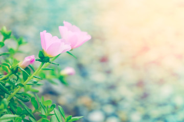 beautiful colorful flower in pastel vitage and retro style with blur background for backdrop background desktop wallpaper use