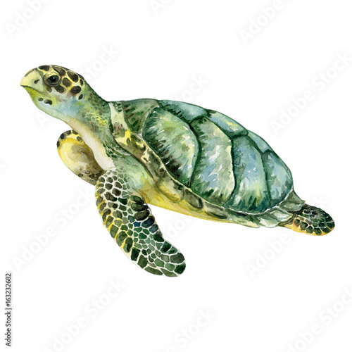 Sea Green Turtle Isolated On White Background Watercolor Template