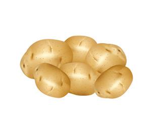 White potatoes on white background