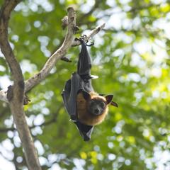 Bat hanging upside down in tree