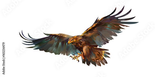 Fototapete Drawing flying eagle on white background