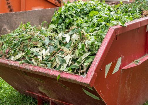 Container mit Grünabfälle Gartenbau