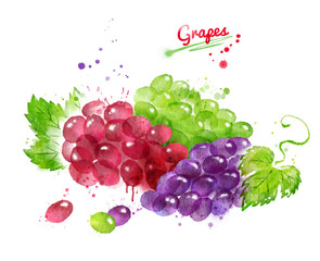 Watercolor illustration of bunches of grapes