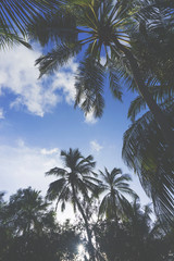 Summer time exotic tropical palm tree