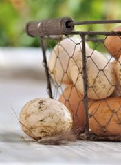 œufs frais dans panier sur table de jardin