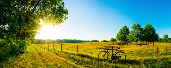 Krajobraz w lecie z drzewami i łąkami w jaskrawym świetle słonecznym