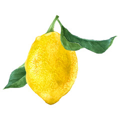 Watercolor lemon fruit