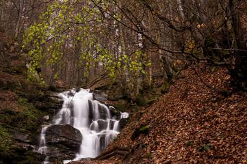 Forest stream waterfall. Waterfall forest rocks