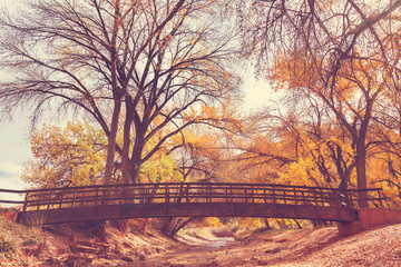 Fotobehang Meloen Bridge in autumn forest