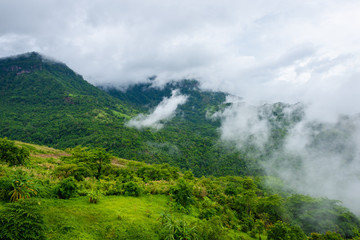 Green forest mountain with sea fog