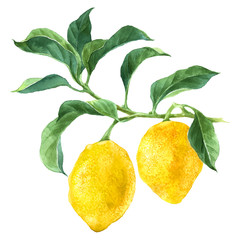 Watercolor lemon tree branch